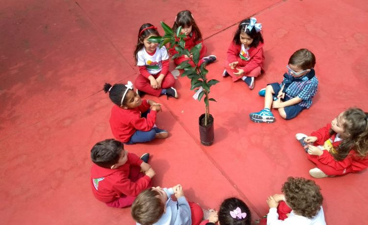 """""""Plantar uma árvore, é cuidar do amanhã"""""""