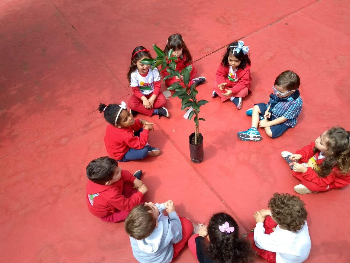 """🌳""""Plantar uma árvore, é cuidar do amanhã"""" Nesta semana para comemorar o Dia da Árvore (21 de Setembro), as crianças da Escola Baronesa plantaram mudas de árvores frutíferas de amora, pitanga e ponkan, agora cuidaremos com todo carinho.💚🌳"""